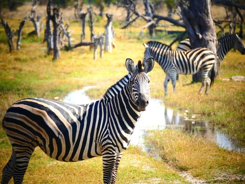 Namibia & Botswana - Wüsten, Landschaften & Wildtiere