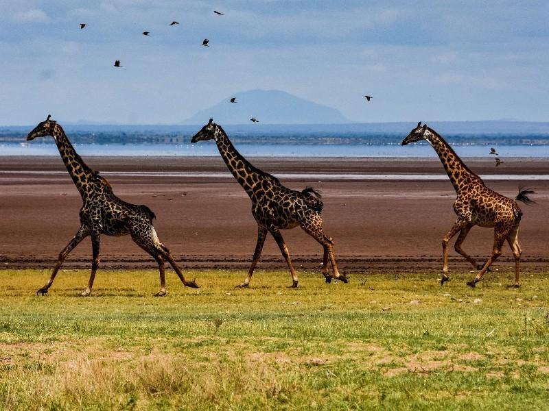 Traumkombi Sansibar & Selous Game Reserve - inkl. Flug