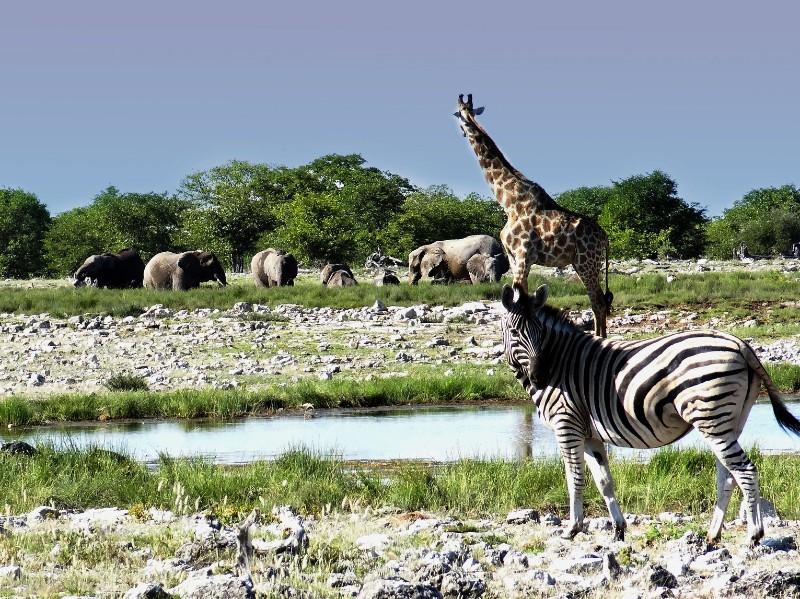 Die Highlights von Namibia entdecken