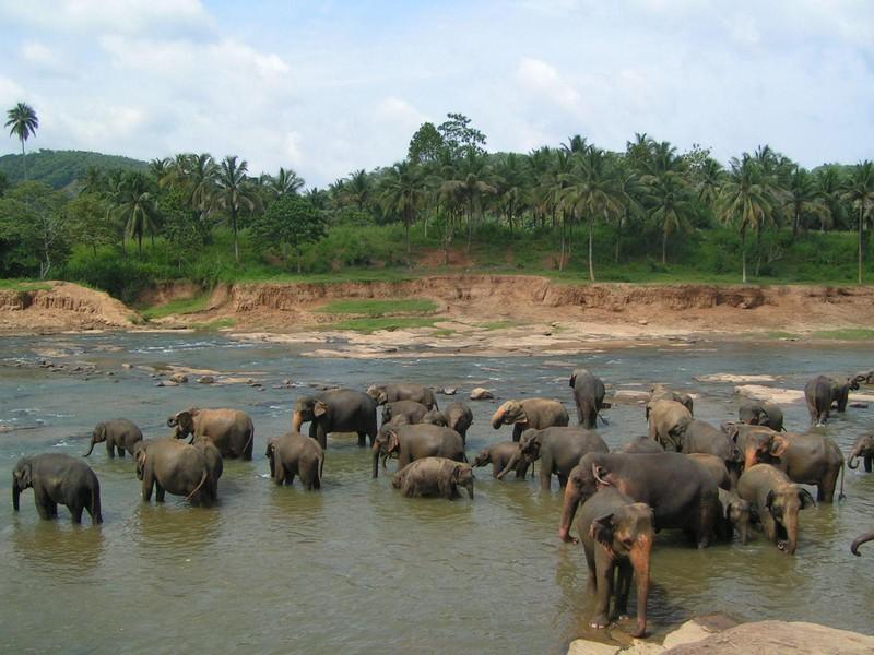 Elefanten in Pinnawela