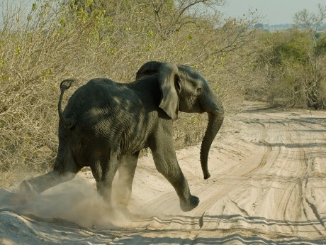 Südafrika - Abenteuer Kruger Nationalpark