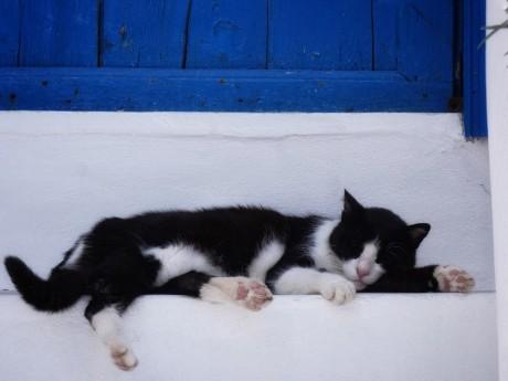 griechenland-naxos-katze auf treppe