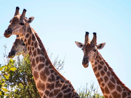 Südafrika - Kruger Nationalpark entdecken deluxe