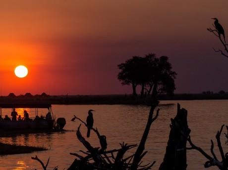 Wilder Chobe Nationalpark