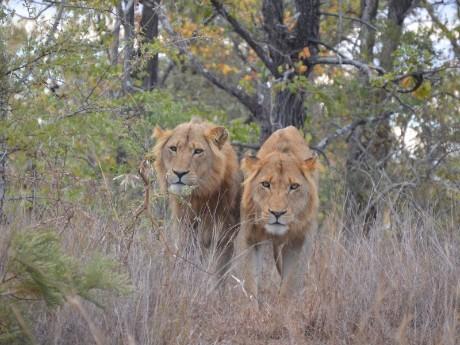 Südafrika - Kruger Nationalpark entdecken