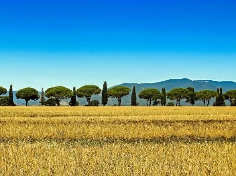 Italien-Toskana-Zypressen