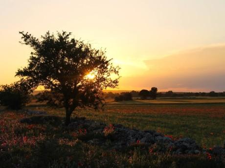 Italien-Apulien-Sonnenuntergang
